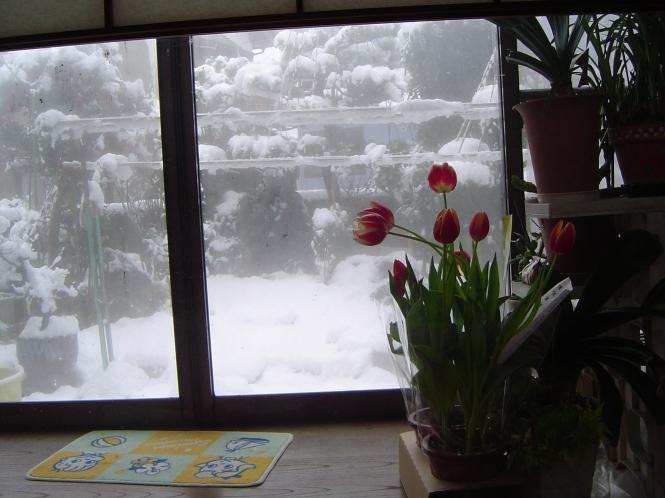 Tulips & Snowflakes