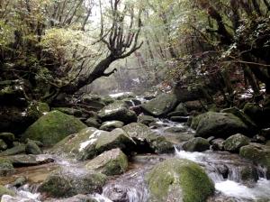 Shiratani Unsuikyo, Yakushima, Kagoshima-ken